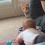 baby-cat2-1