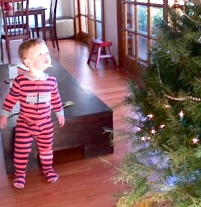 Bodhi-ChristmasTree-admiring-crop